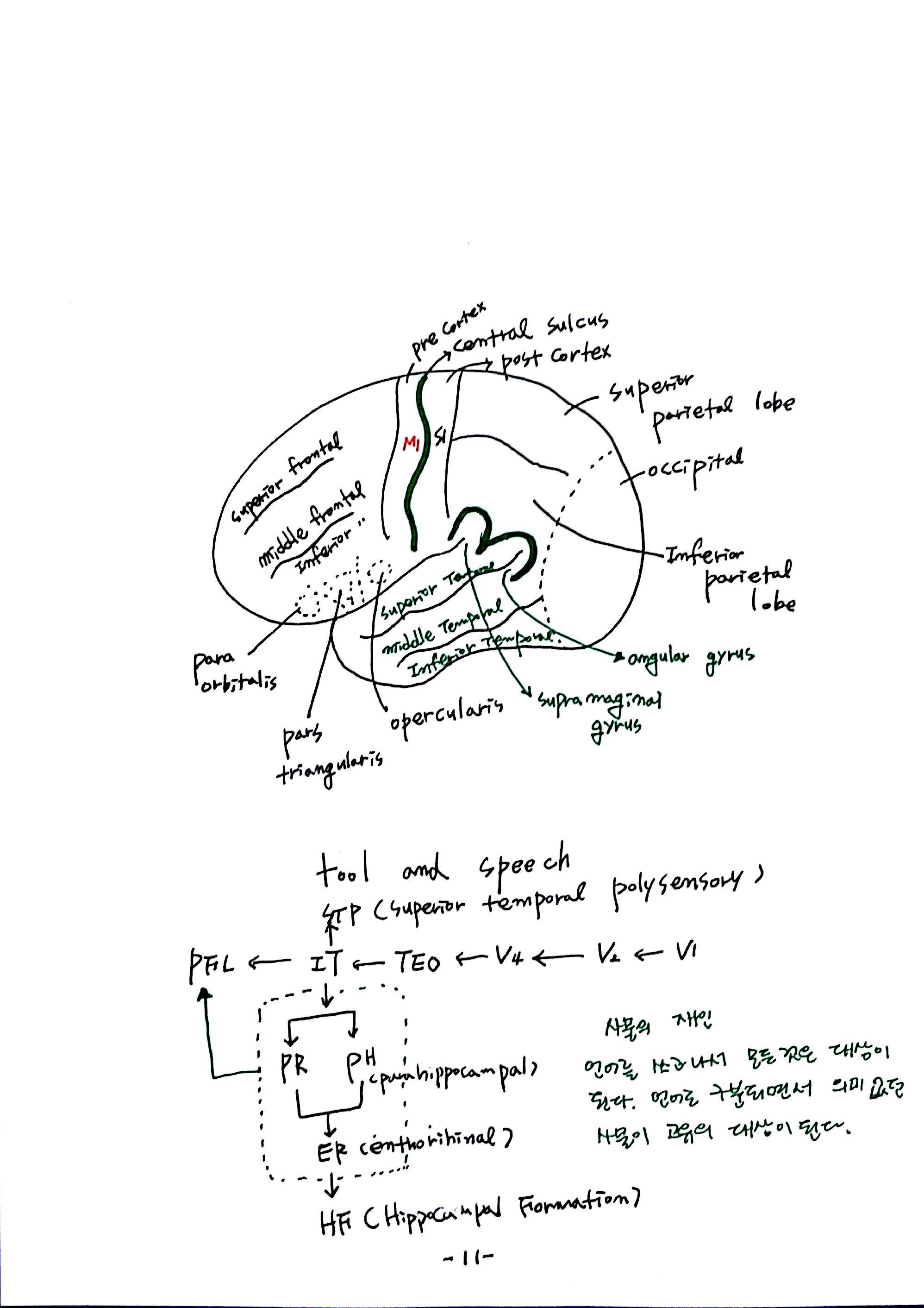 제 6회 특별한 뇌과학 2강 시각2 (11).jpg
