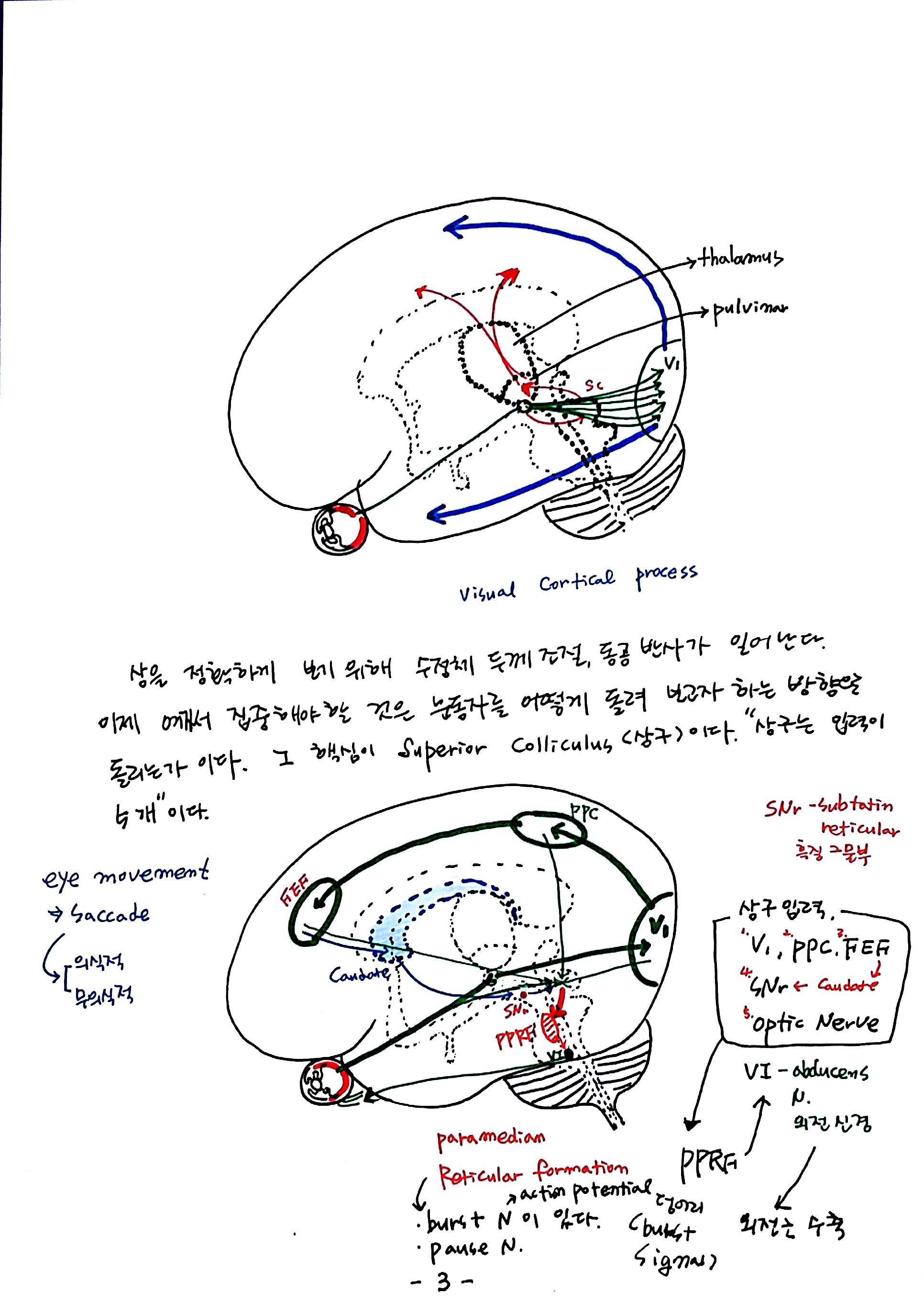 제 6회 특별한 뇌과학 2강 시각2 (3).jpg