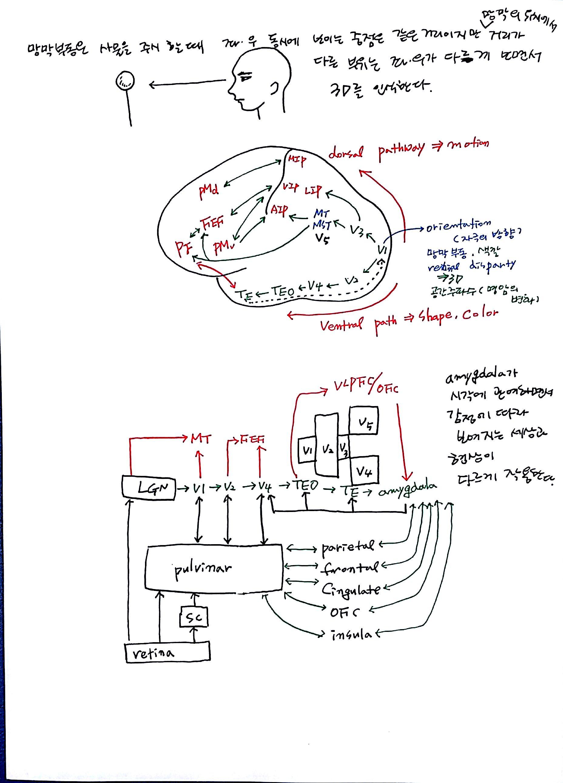 제 6회 특별한 뇌과학 1강 기억 (9).jpg