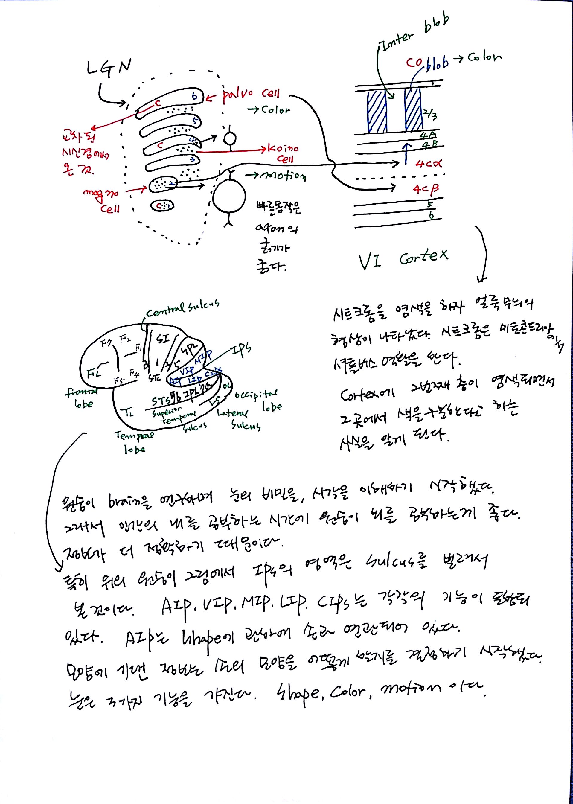 제 6회 특별한 뇌과학 1강 기억 (8).jpg