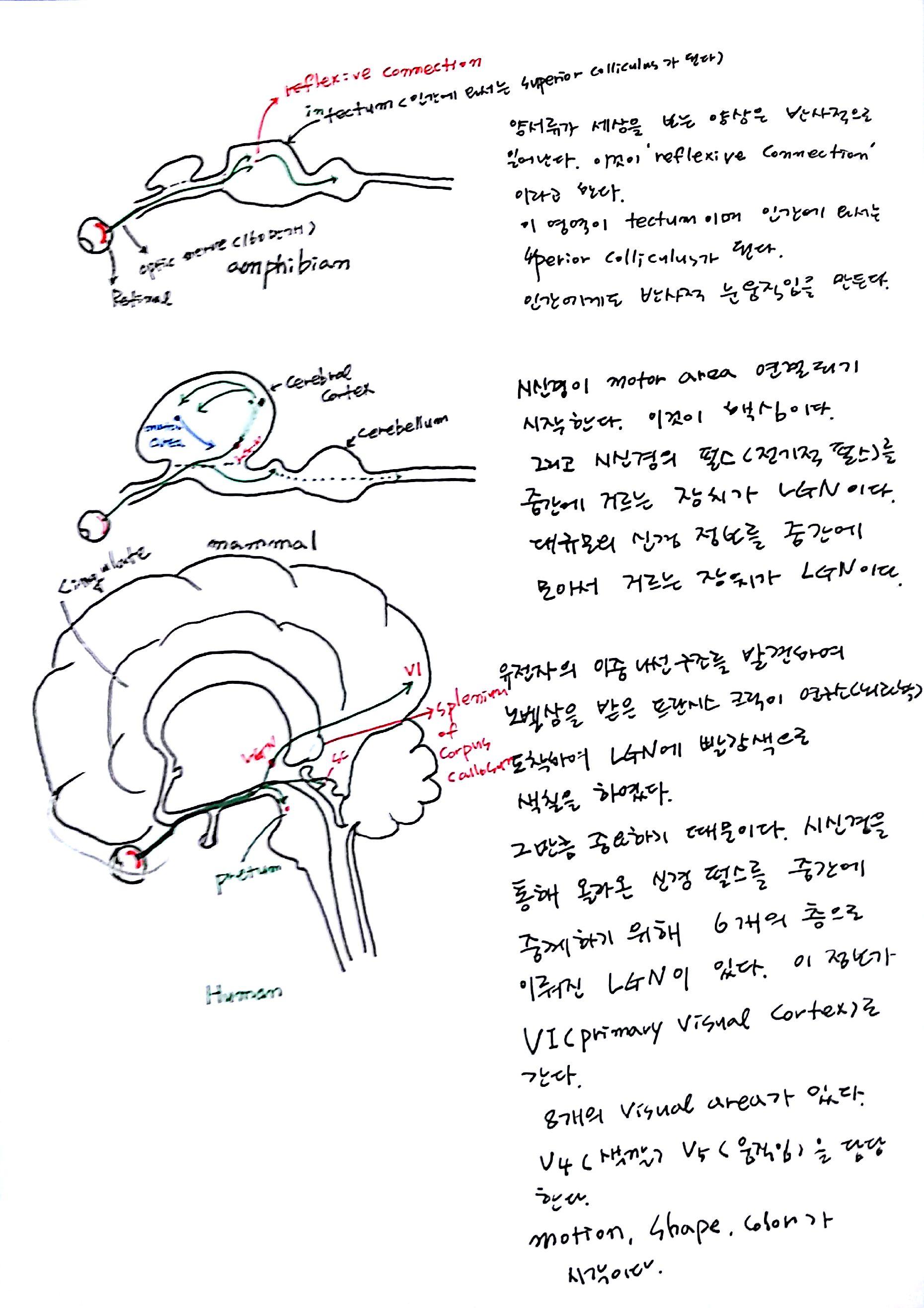 제 6회 특별한 뇌과학 1강 기억 (2).jpg