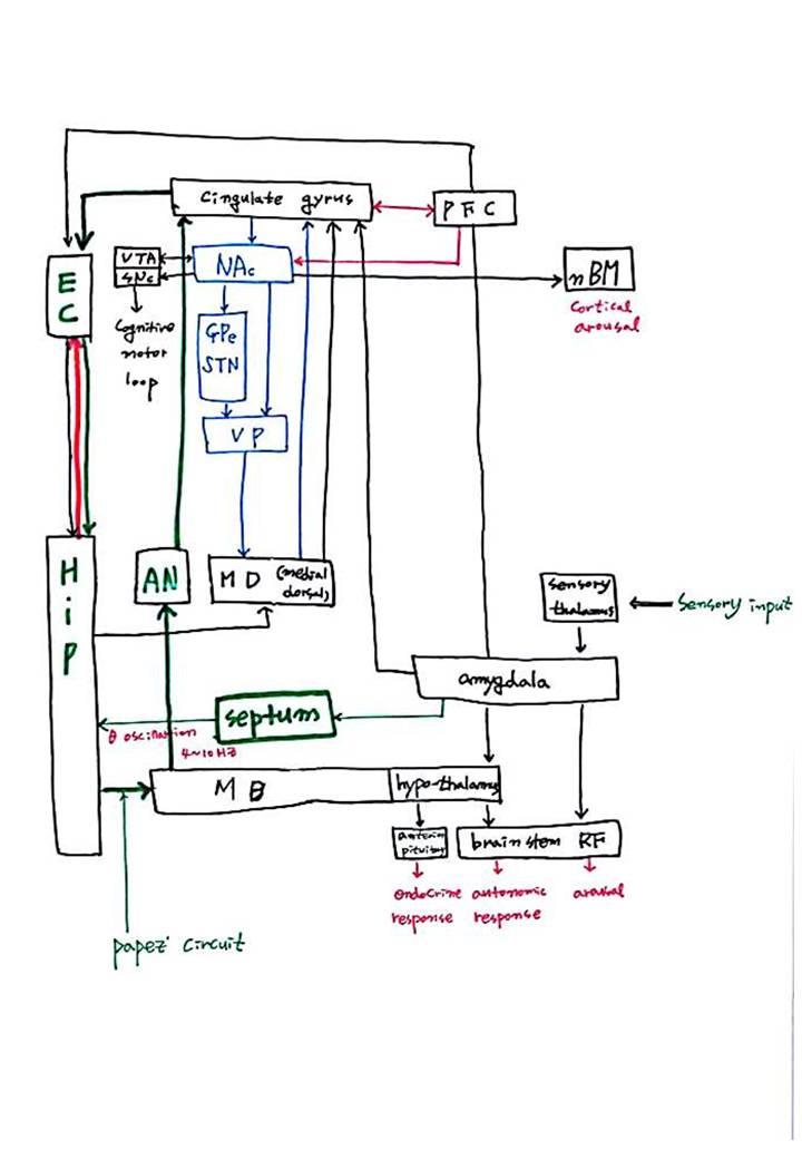 제 8회 특별한 뇌과학 4강 - 기억 (4).JPG