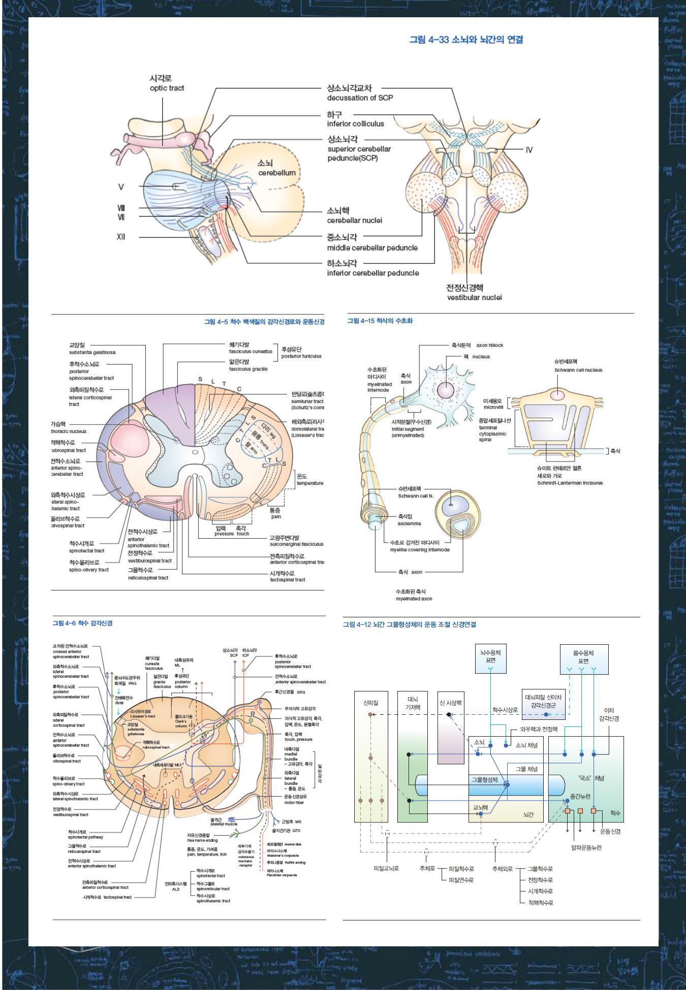 뇌과학공부_소개_08.jpg